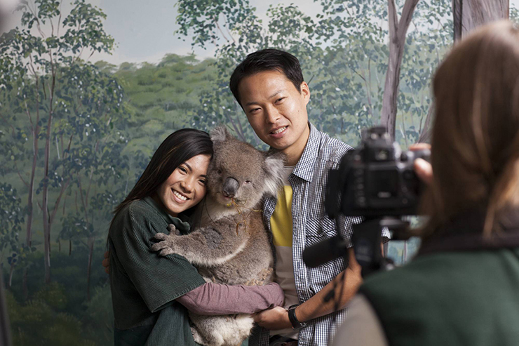 Koala hold at Clealand Wildlife Park