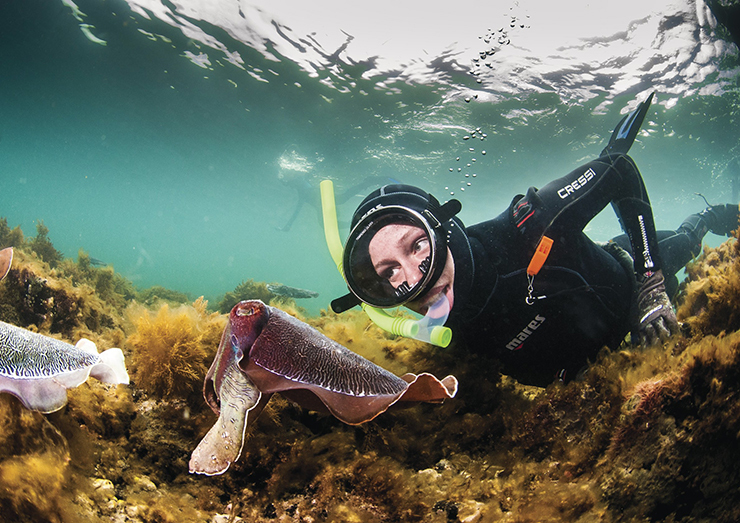 Snorkelling with cuttlefish