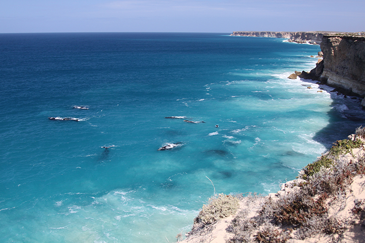 Whales at Nullarbor National Park