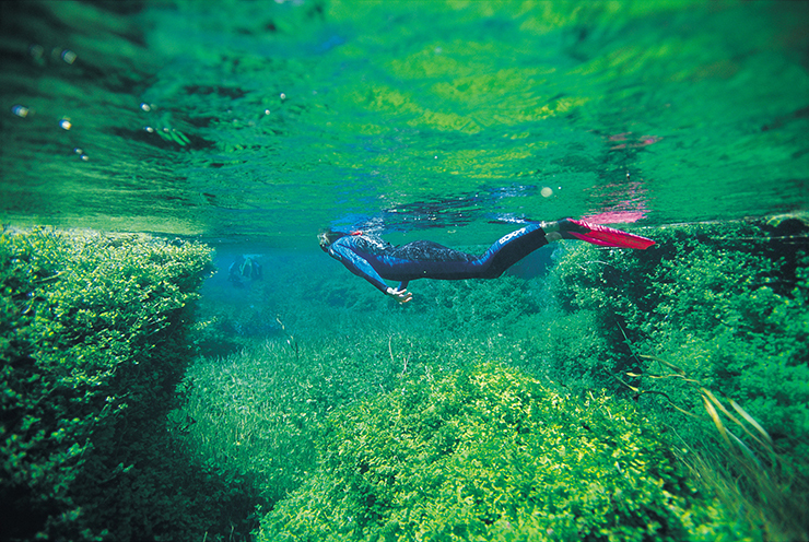 Snorkelling at Piccaninnie Ponds Conservation Park